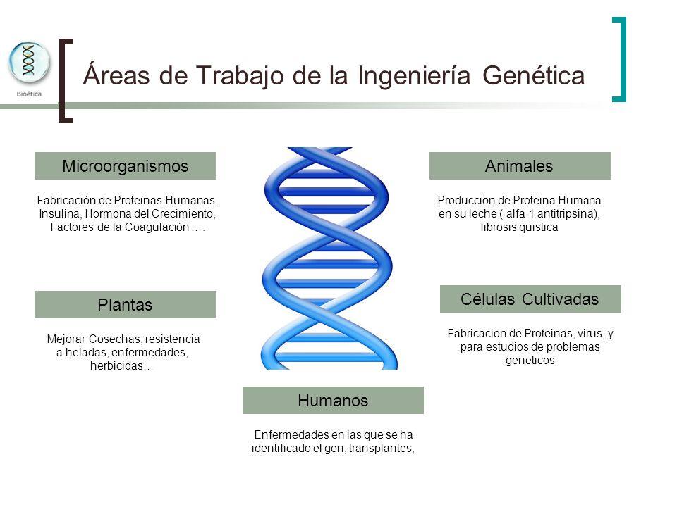 Áreas de Trabajo de la Ingeniería Genética