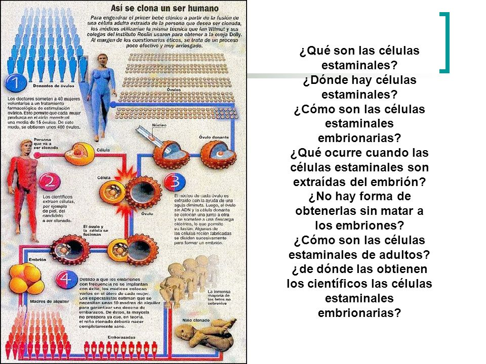 ¿Qué son las células estaminales ¿Dónde hay células estaminales