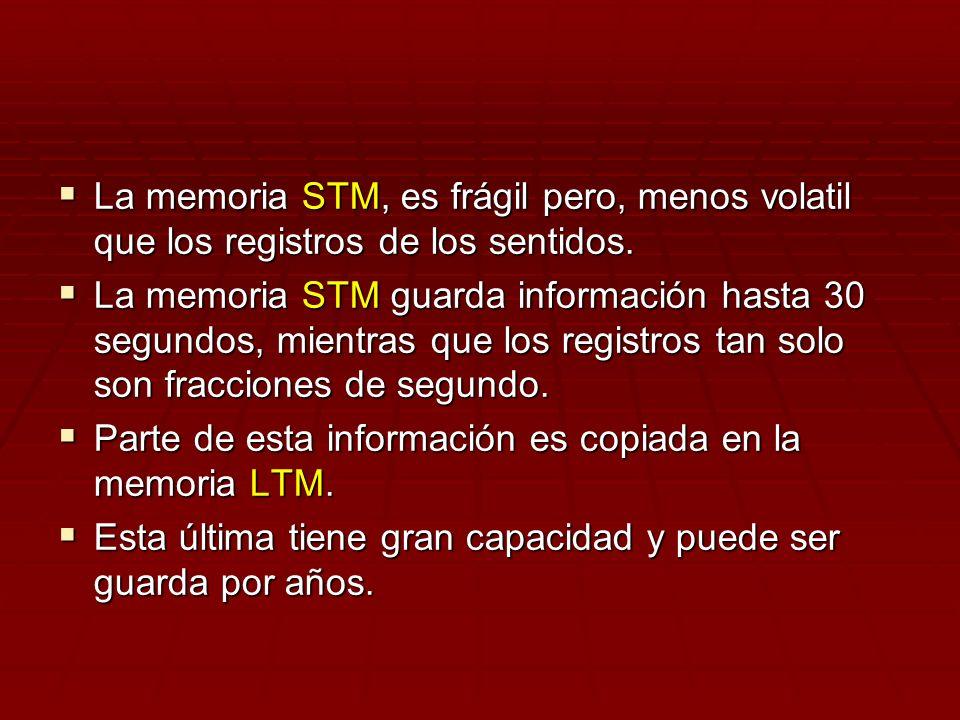 La memoria STM, es frágil pero, menos volatil que los registros de los sentidos.