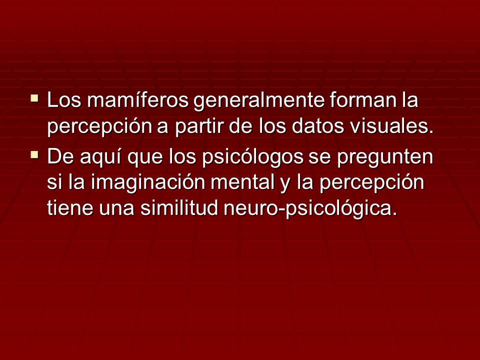Los mamíferos generalmente forman la percepción a partir de los datos visuales.