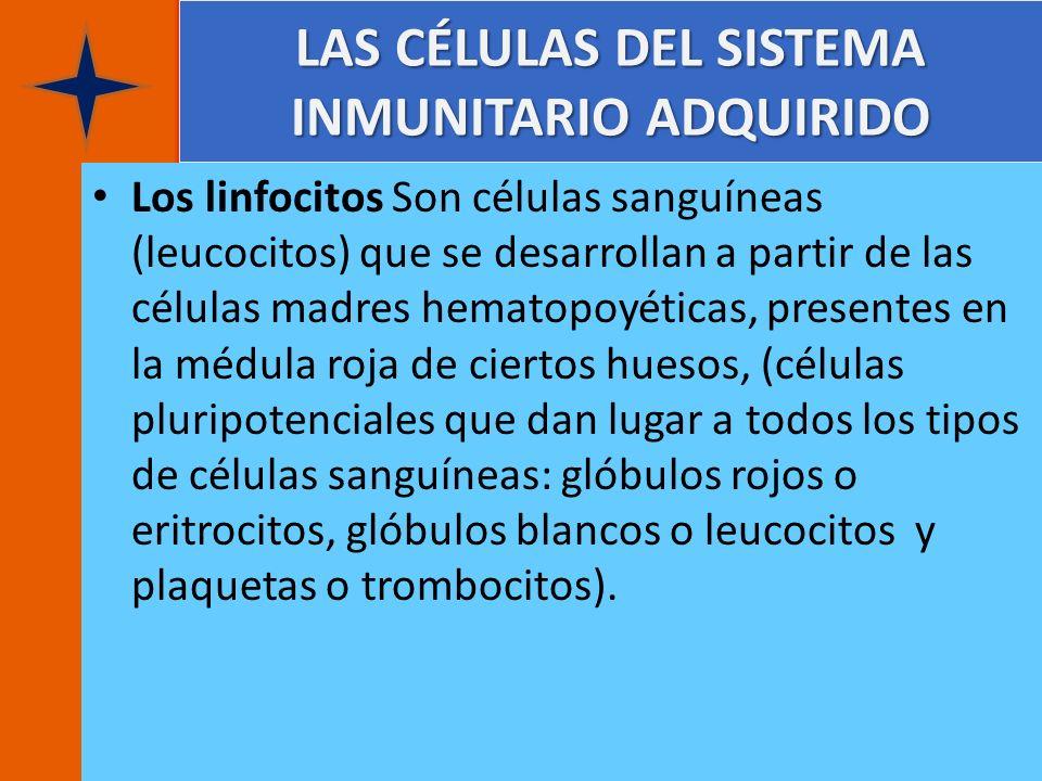 LAS CÉLULAS DEL SISTEMA INMUNITARIO ADQUIRIDO