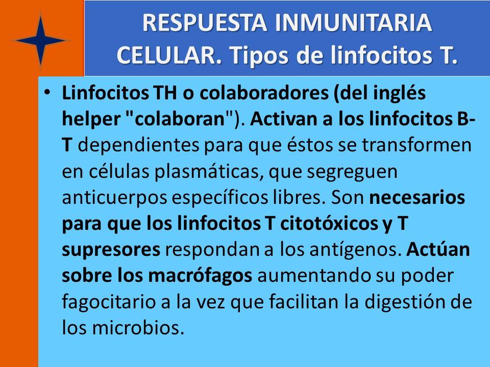 RESPUESTA INMUNITARIA CELULAR. Tipos de linfocitos T.