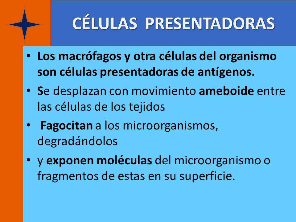 CÉLULAS PRESENTADORAS