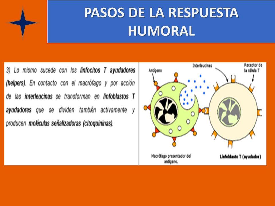 PASOS DE LA RESPUESTA HUMORAL
