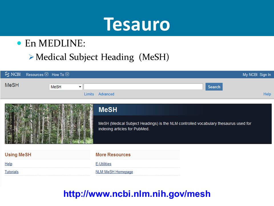 Tesauro En MEDLINE: Medical Subject Heading (MeSH)