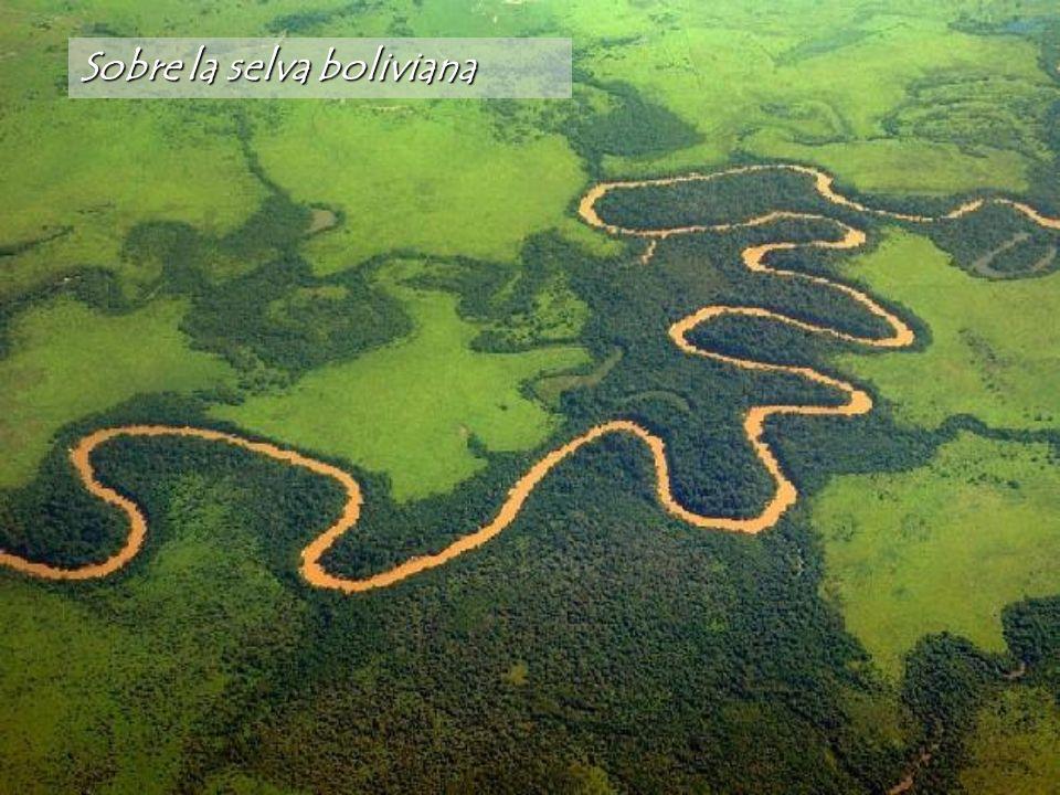 Sobre la selva boliviana