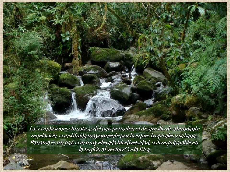 vegetación, constituida mayormente por bosques tropicales y sabanas.