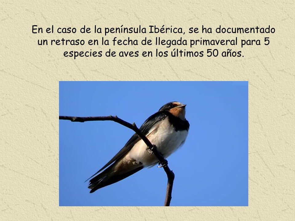 En el caso de la península Ibérica, se ha documentado un retraso en la fecha de llegada primaveral para 5 especies de aves en los últimos 50 años.