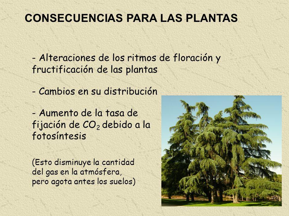 CONSECUENCIAS PARA LAS PLANTAS