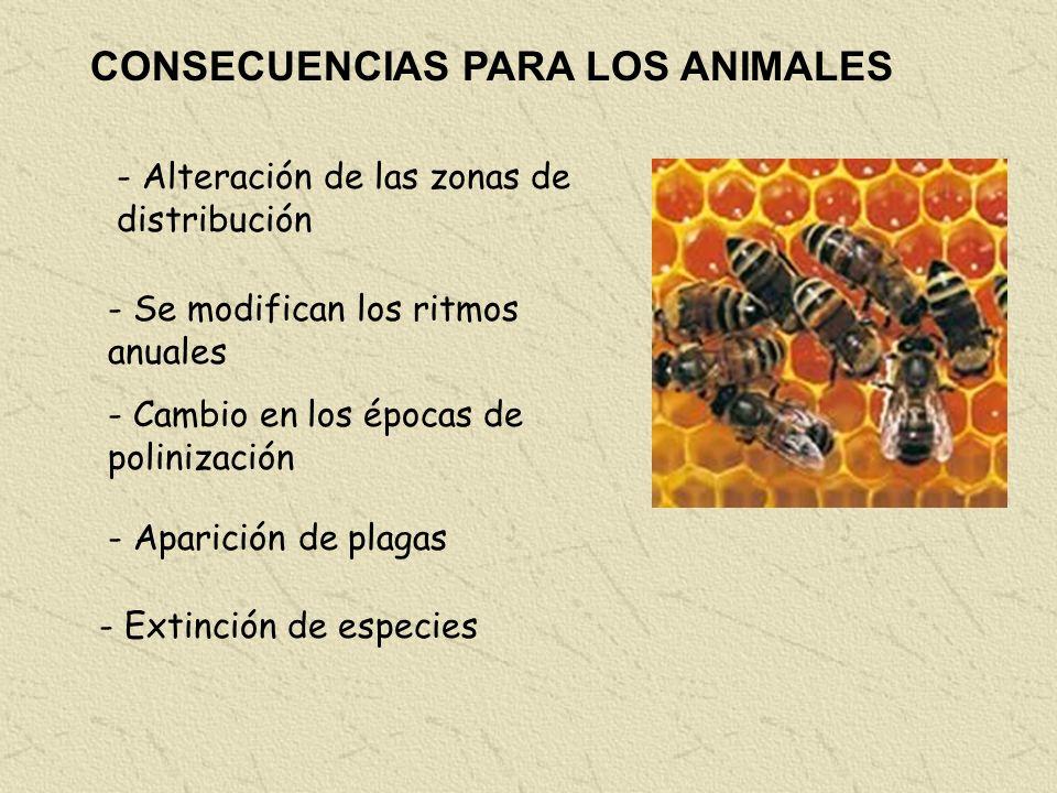 CONSECUENCIAS PARA LOS ANIMALES