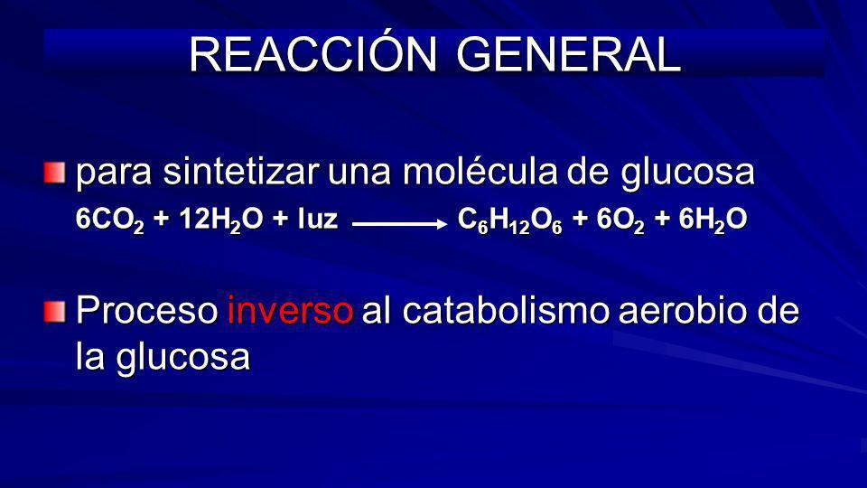 REACCIÓN GENERAL para sintetizar una molécula de glucosa