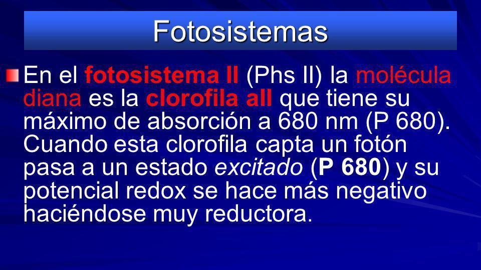 Fotosistemas