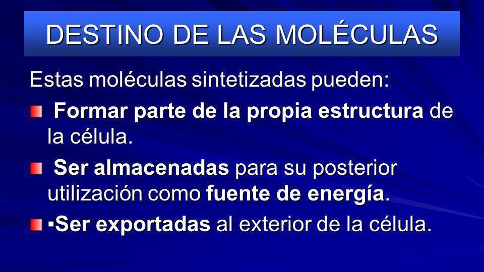 DESTINO DE LAS MOLÉCULAS