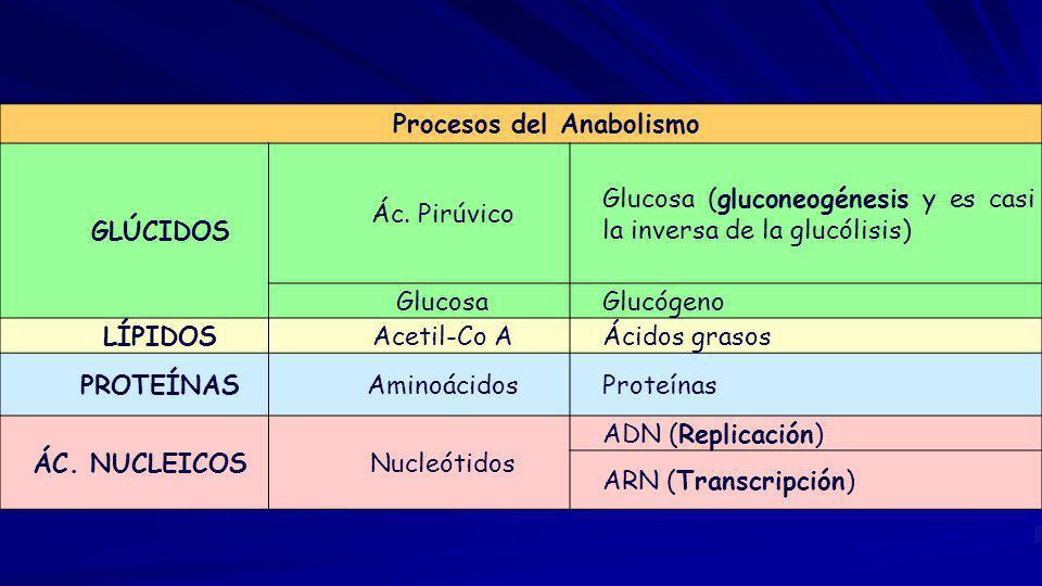 Procesos del Anabolismo