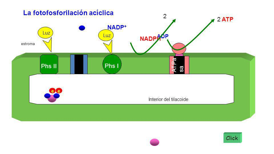 La fotofosforilación acíclica