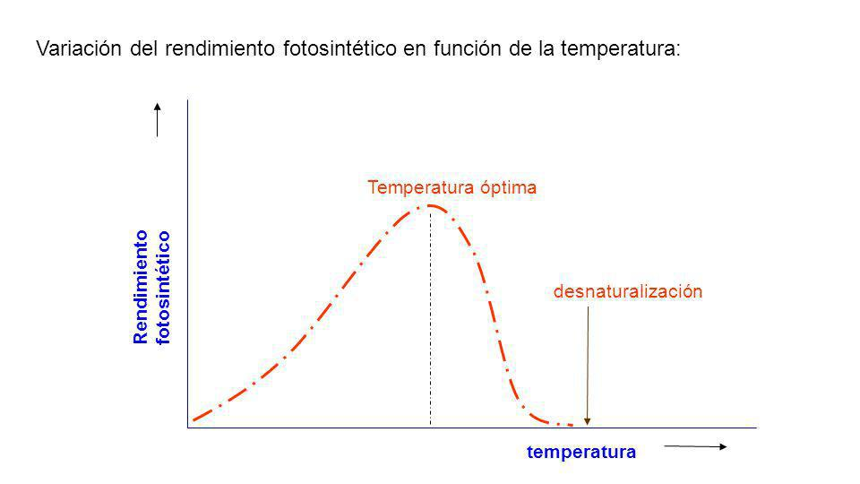 Variación del rendimiento fotosintético en función de la temperatura: