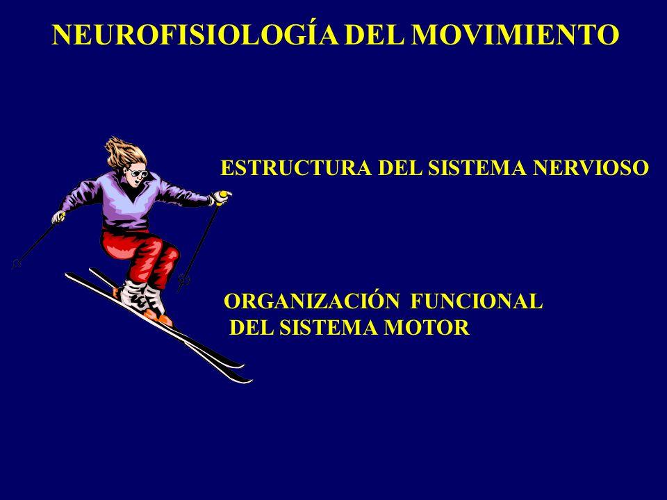 NEUROFISIOLOGÍA DEL MOVIMIENTO