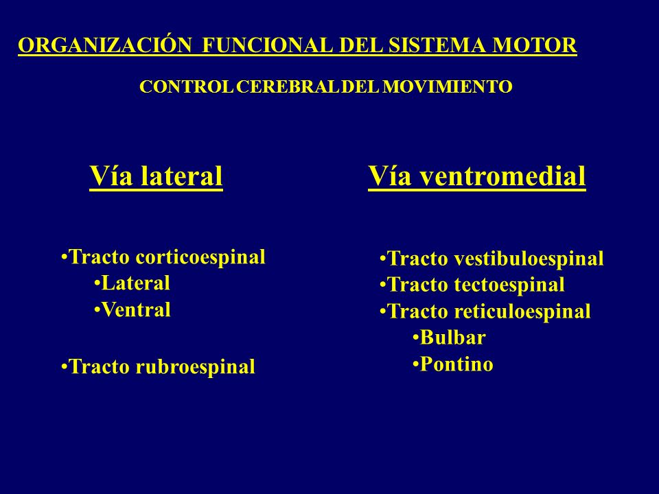Vía lateral Vía ventromedial ORGANIZACIÓN FUNCIONAL DEL SISTEMA MOTOR