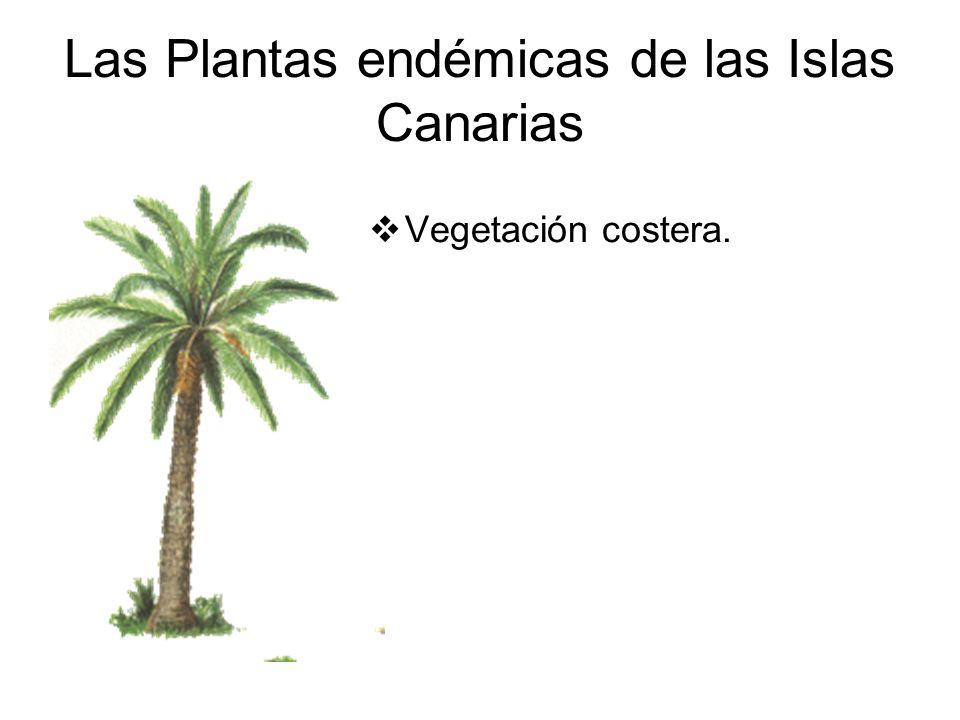 Las Plantas endémicas de las Islas Canarias