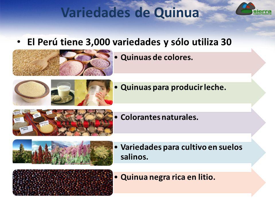 Variedades de Quinua El Perú tiene 3,000 variedades y sólo utiliza 30