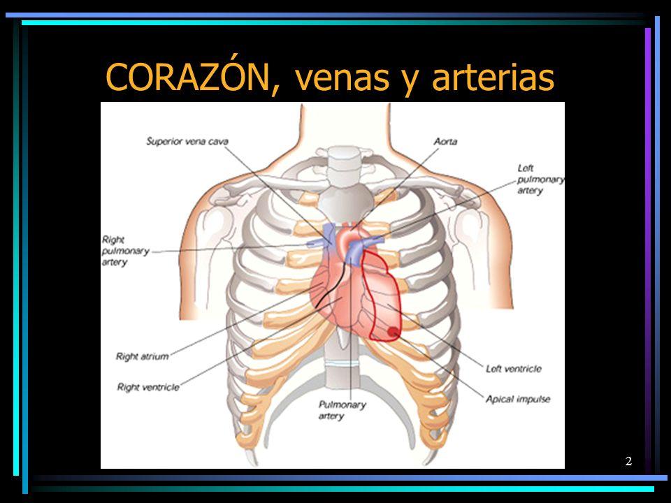 CORAZÓN, venas y arterias