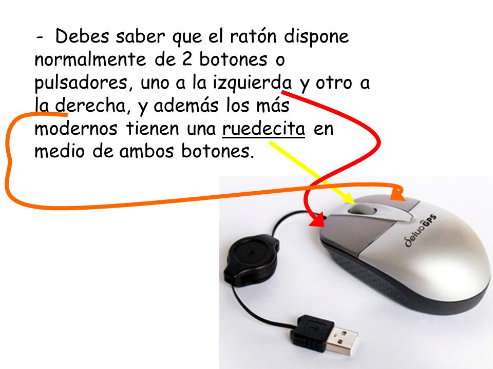 - Debes saber que el ratón dispone normalmente de 2 botones o pulsadores, uno a la izquierda y otro a la derecha, y además los más modernos tienen una ruedecita en medio de ambos botones.