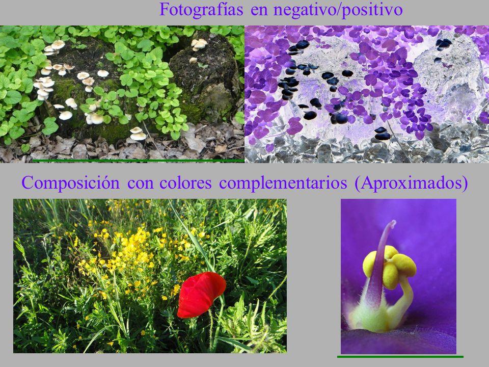 Fotografías en negativo/positivo
