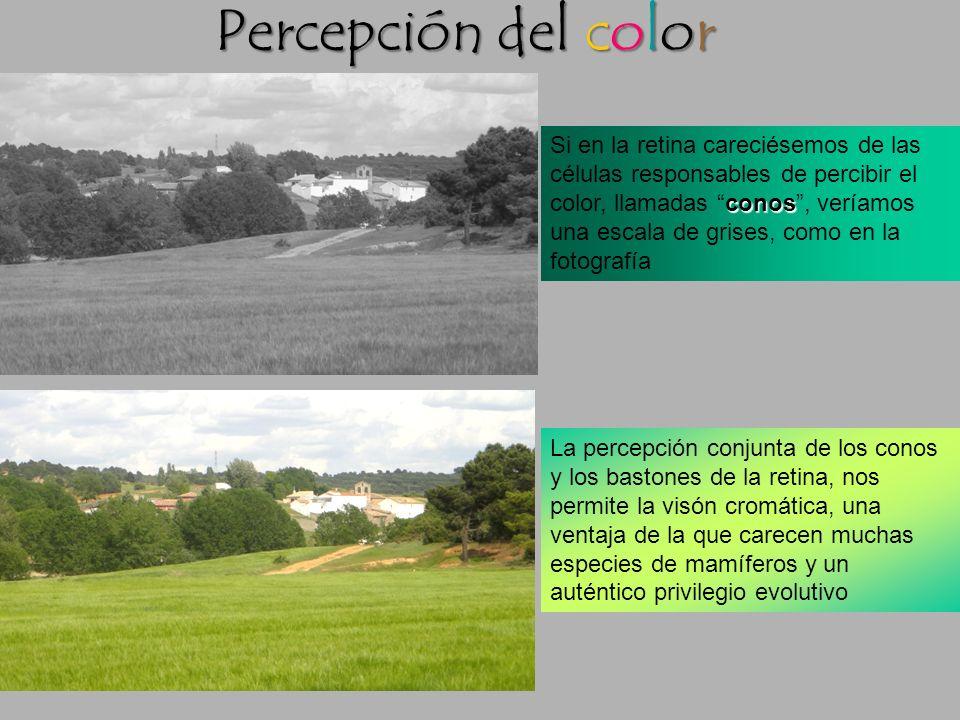 Percepción del color Si en la retina careciésemos de las
