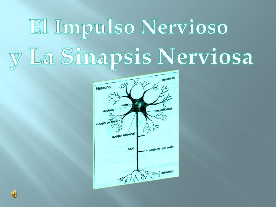 El Impulso Nervioso y La Sinapsis Nerviosa