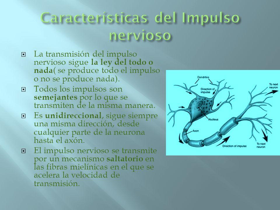 Características del Impulso nervioso