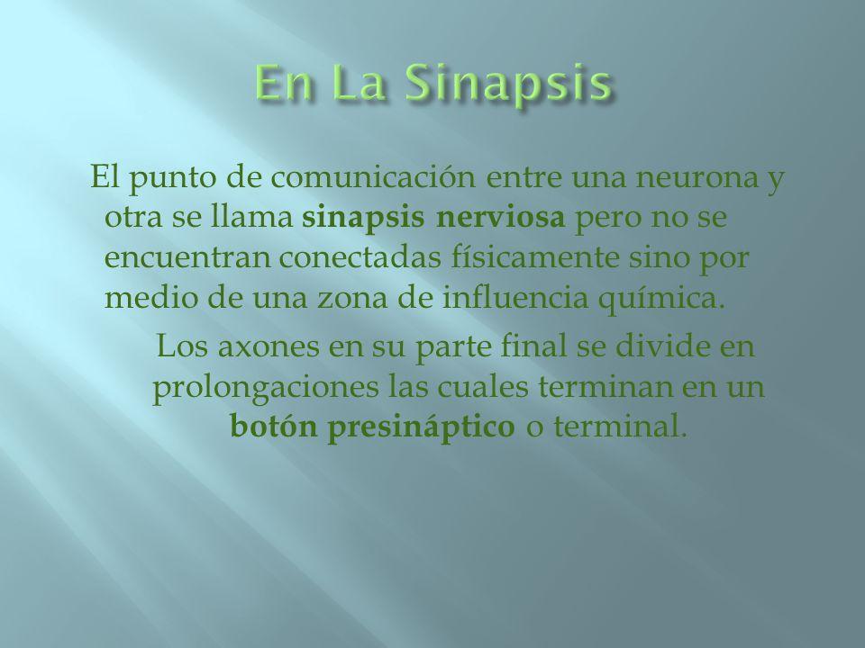 En La Sinapsis