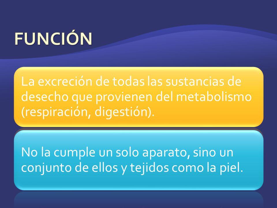 FUNCIÓN La excreción de todas las sustancias de desecho que provienen del metabolismo (respiración, digestión).