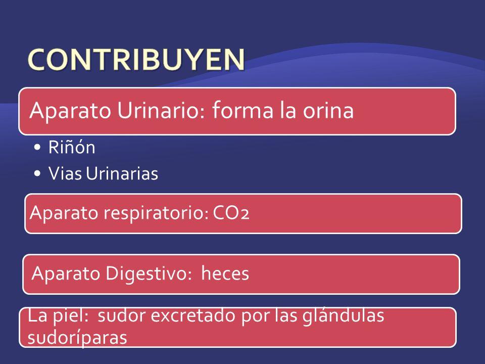 CONTRIBUYEN Aparato respiratorio: CO2 Aparato Digestivo: heces