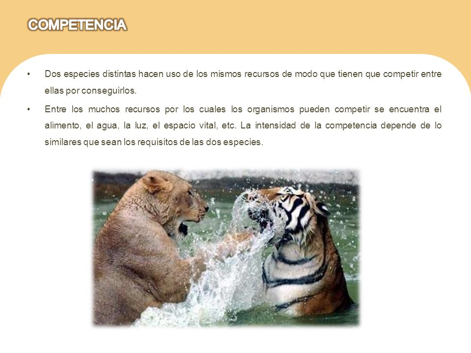 COMPETENCIA Dos especies distintas hacen uso de los mismos recursos de modo que tienen que competir entre ellas por conseguirlos.