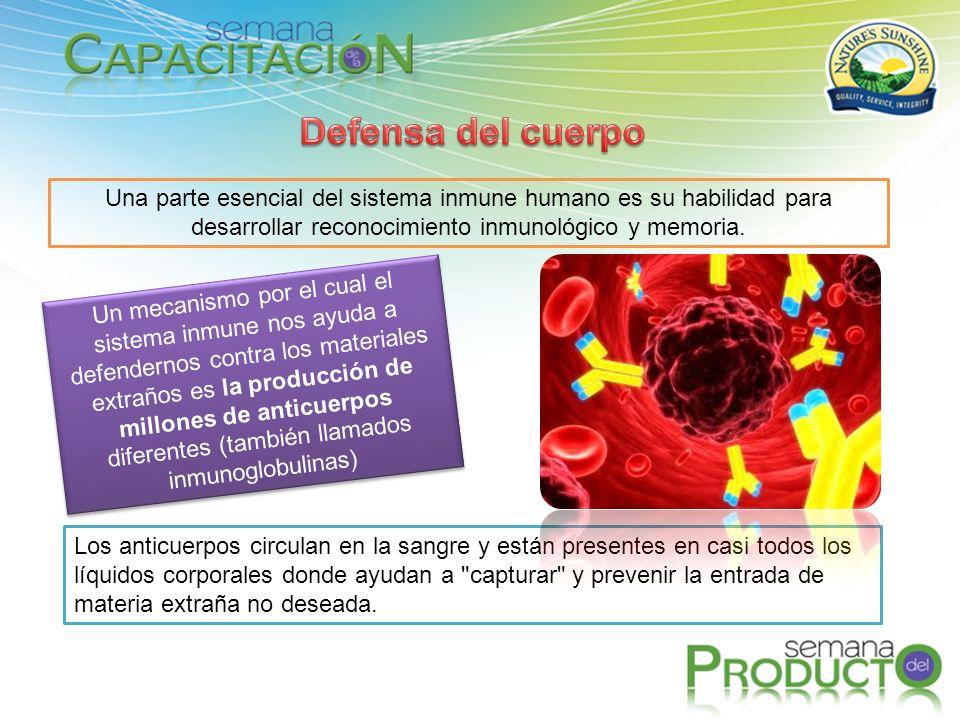 Defensa del cuerpo Una parte esencial del sistema inmune humano es su habilidad para desarrollar reconocimiento inmunológico y memoria.