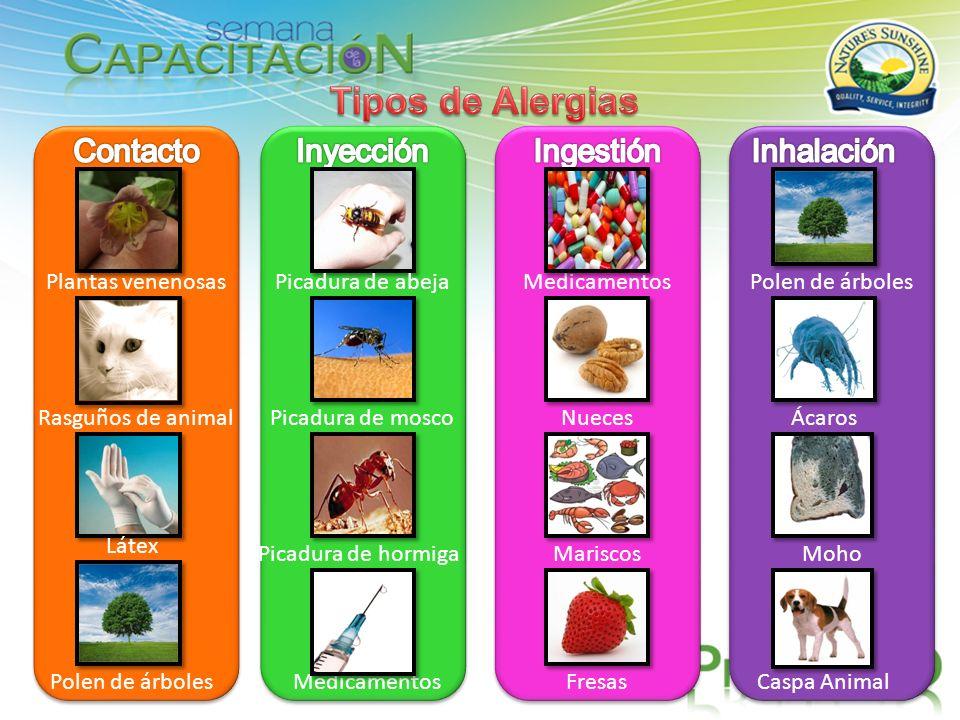 Tipos de Alergias Contacto Inyección Ingestión Inhalación