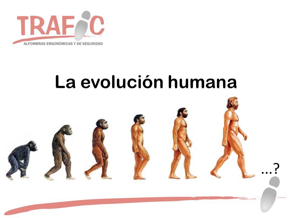 La evolución humana ...