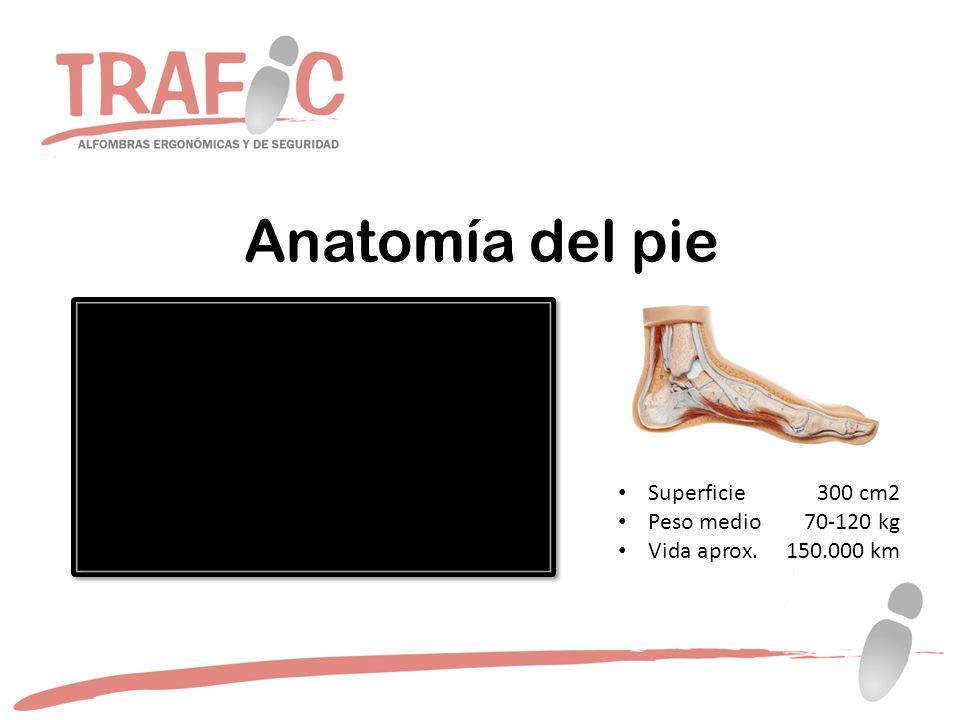 Anatomía del pie Superficie 300 cm2 Peso medio 70-120 kg