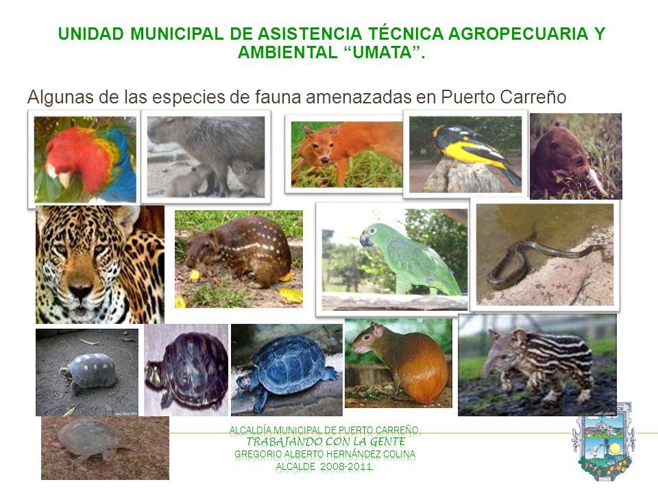 Algunas de las especies de fauna amenazadas en Puerto Carreño