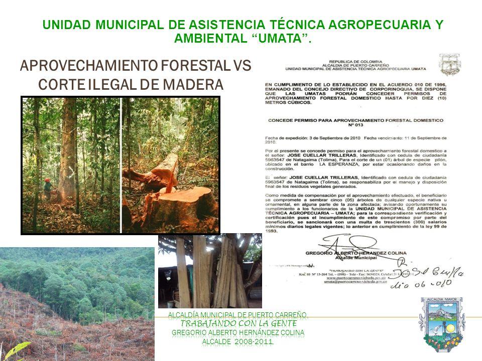 APROVECHAMIENTO FORESTAL VS CORTE ILEGAL DE MADERA