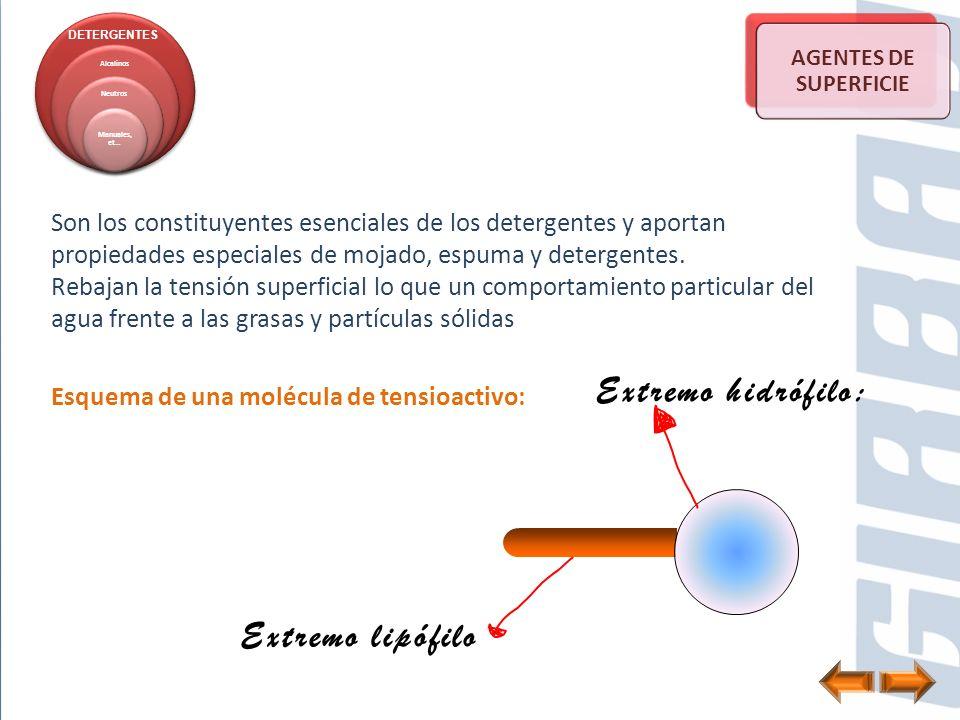 Extremo hidrófilo: Extremo lipófilo