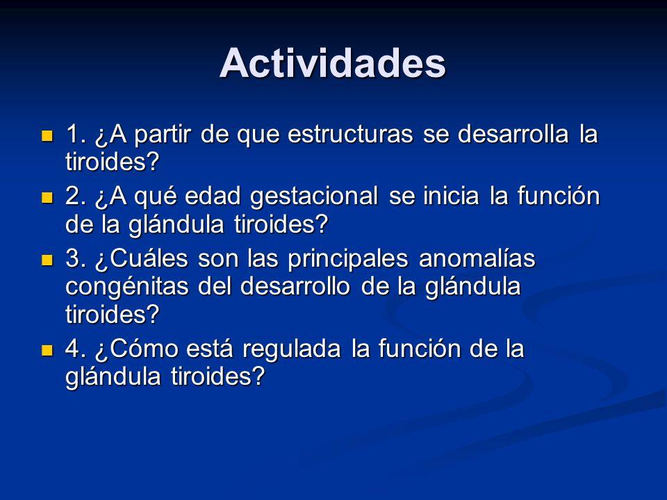 Actividades 1. ¿A partir de que estructuras se desarrolla la tiroides