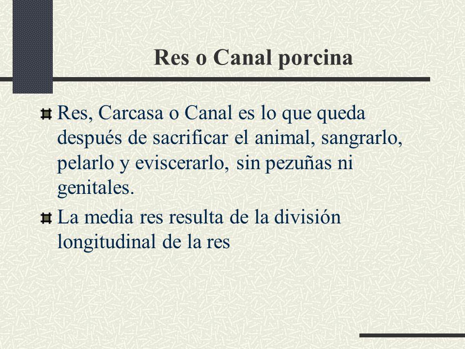 Res o Canal porcina Res, Carcasa o Canal es lo que queda después de sacrificar el animal, sangrarlo, pelarlo y eviscerarlo, sin pezuñas ni genitales.