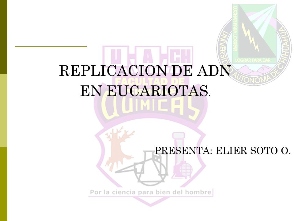 REPLICACION DE ADN EN EUCARIOTAS. PRESENTA: ELIER SOTO O.