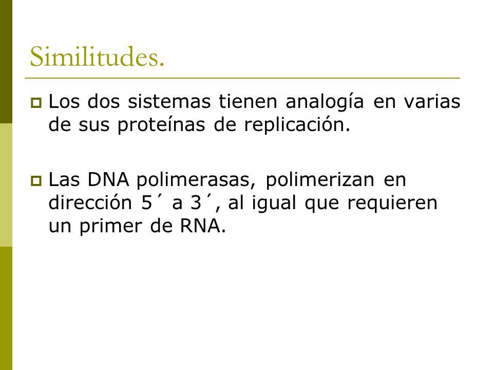 Similitudes. Los dos sistemas tienen analogía en varias de sus proteínas de replicación.