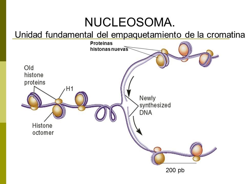 Unidad fundamental del empaquetamiento de la cromatina