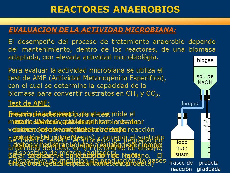 REACTORES ANAEROBIOS EVALUACION DE LA ACTIVIDAD MICROBIANA: