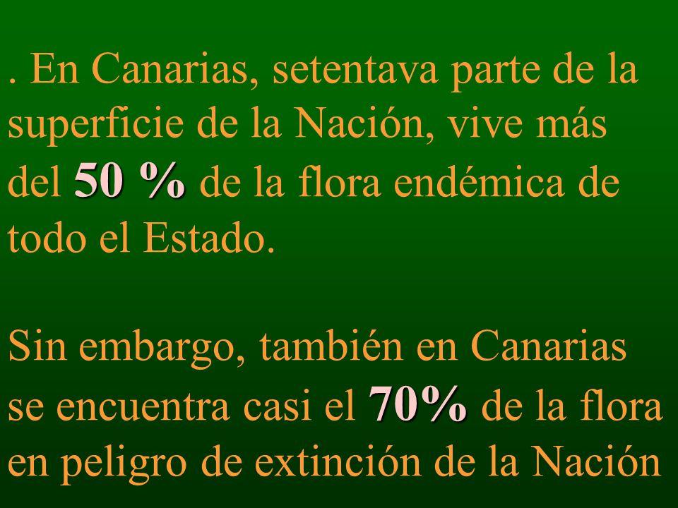En Canarias, setentava parte de la superficie de la Nación, vive más del 50 % de la flora endémica de todo el Estado.