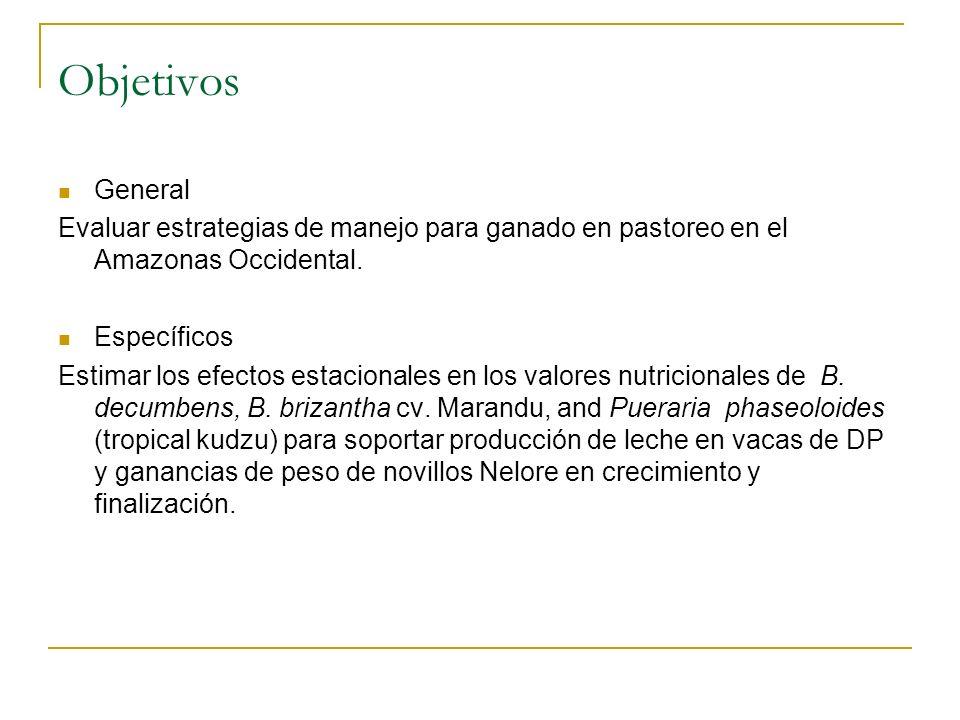 Objetivos General. Evaluar estrategias de manejo para ganado en pastoreo en el Amazonas Occidental.