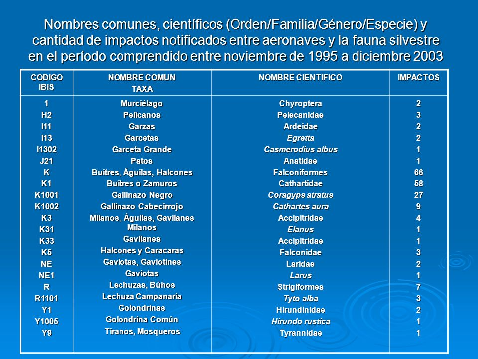 Nombres comunes, científicos (Orden/Familia/Género/Especie) y cantidad de impactos notificados entre aeronaves y la fauna silvestre en el período comprendido entre noviembre de 1995 a diciembre 2003